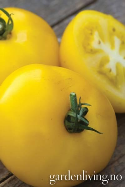 Tomat, Drivhus- 'Sunny Boy Hybrid'