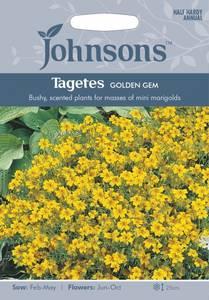 Bilde av Fløyelsblomst 'Golden Gem', signet - Tagetes tenuifolia