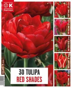 Bilde av Tulipaner Red Shades - 30 løk