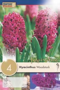 Bilde av Svibel 'Woodstock' - Hyacinthus - 4 stk