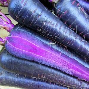 Bilde av Gulrot 'Purple Hybrid' F1 - Daucus carota