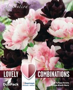Bilde av Tulipan Duopack Dobbel svart og rosa - 12 løk