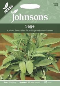 Bilde av Salvie - Salvia officinalis