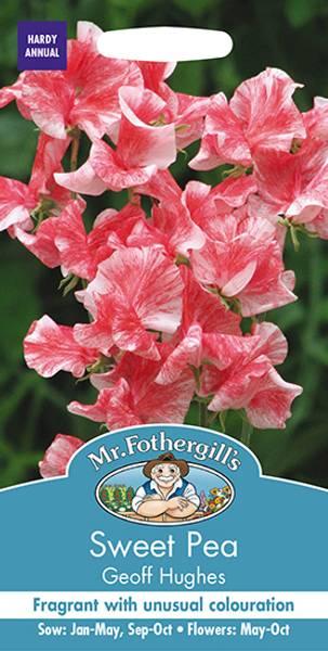 Blomsterert 'Geoff Hughes' - Lathyrus odoratus