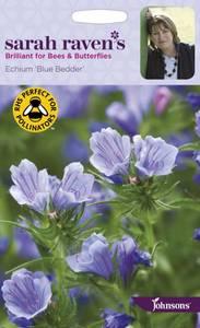 Bilde av Hageormehode 'Blue Bedder' - Echium plantagineum