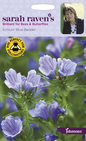 Hageormehode 'Blue Bedder' - Echium plantagineum