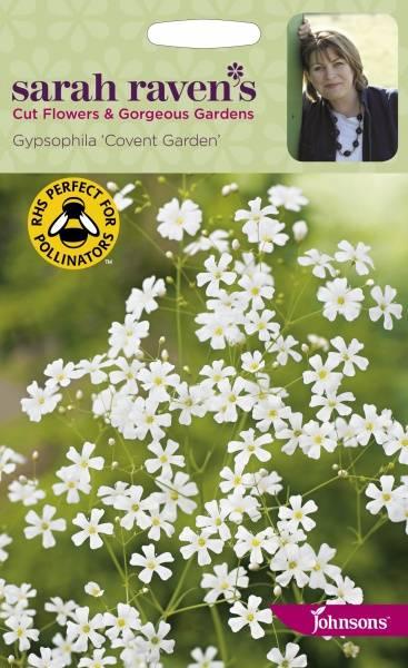 Brudeslør 'Covent Garden' - Gypsophila elegans