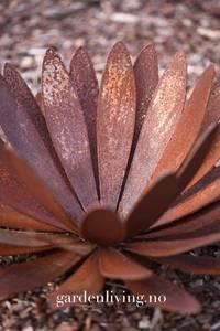 Bilde av Krysantemum stående 50 cm