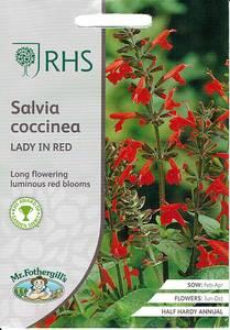 Bilde av Salvie 'Lady in Red' - Salvia coccinea