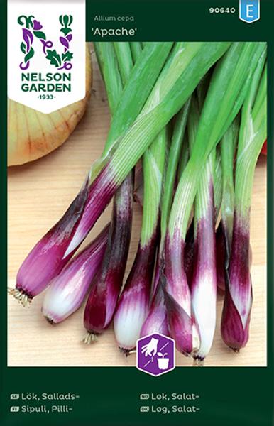 Salatløk 'Apache' - Allium fistulosum