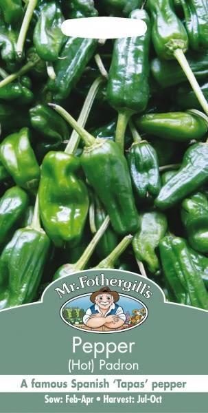 Chilipepper 'Padron' - Capsicum annuum