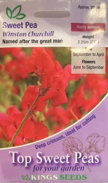 Blomsterert 'Winston Churchill' - Lathyrus odoratus