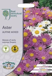 Bilde av Alpeasters Mixed - Aster alpinus