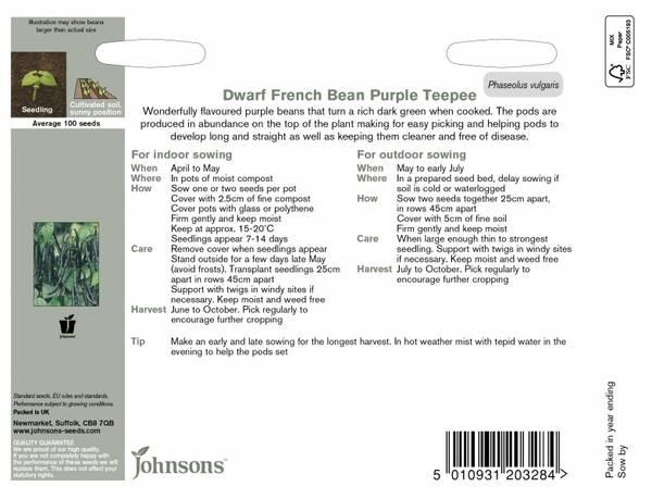 Bønne 'Purple Teepee' - Dvergaspargesbønne