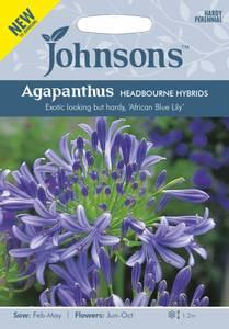 Bilde av Afrikansk lilje 'Headbourne hybrids' - Agapanthus