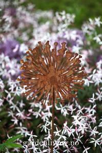 Bilde av Allium 20 cm på stang, 100 cm