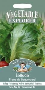 Bilde av Salat, Isberg- 'Frisèe de Beauregard' - Lactuca