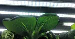 Bilde av LED-lyslist No.1 startsett 60 cm, 15W