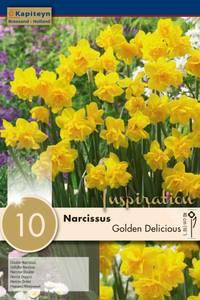 Bilde av Påskelilje 'Golden Delicious' - 10 stk