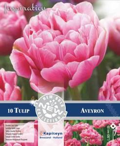 Bilde av Tulipan 'Aveyron', Sen dobbel - 10 stk