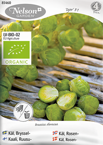 Bilde av Rosenkål 'Igor' - Brassica oleracea, Organic